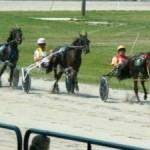 Horse-Racing-Dresden